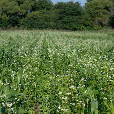 overview of cover crop