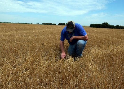 Keith in wheat field