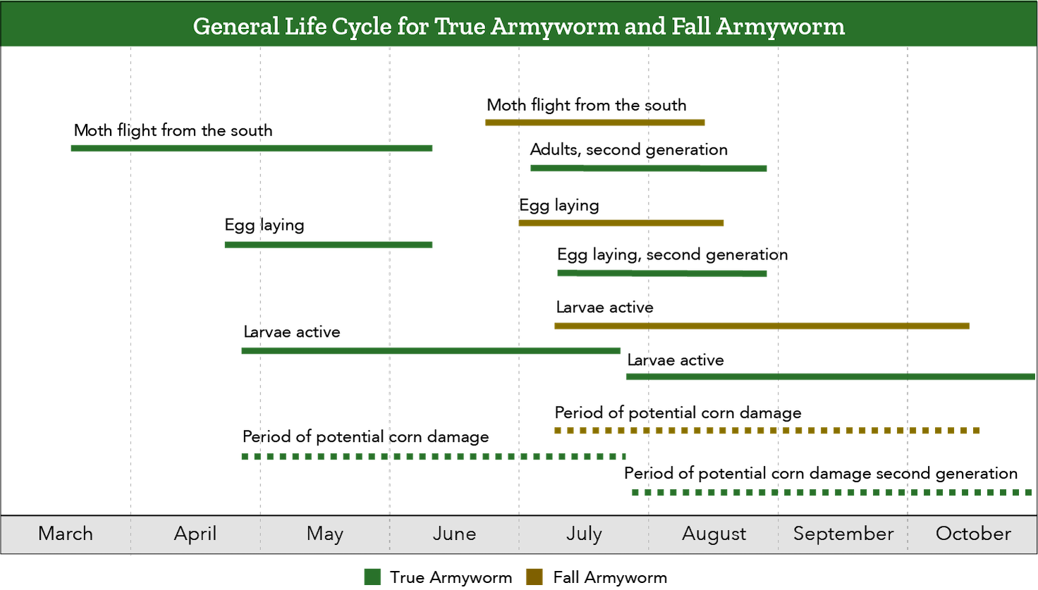 Armyworm lifecycle chart