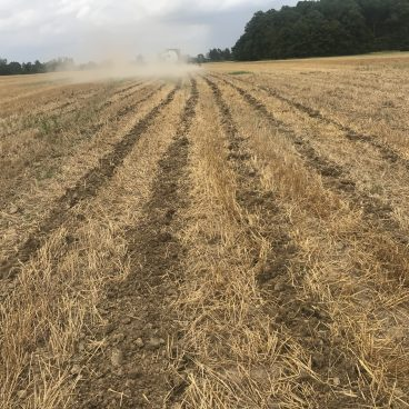 Field with strip tillage