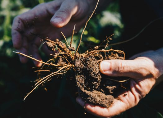 Hands holding soil and roots