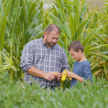 Kevin Ross looking at corn with son