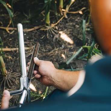 person looking at soil probe