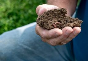 Man holding soil with earthworm